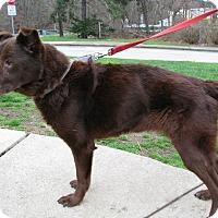 Adopt A Pet :: Arie - New Kensington, PA