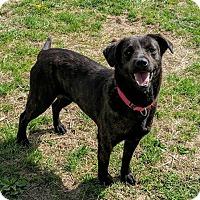 Adopt A Pet :: Esther - Lisbon, OH