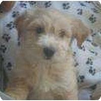 Adopt A Pet :: Prince Andrew - Phoenix, AZ