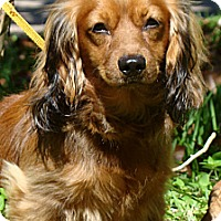 Adopt A Pet :: Emerson - Sugarland, TX