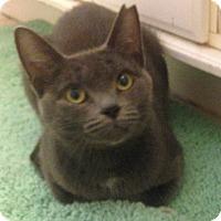 Adopt A Pet :: Marcie - Davison, MI