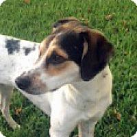Adopt A Pet :: Cali - Houston, TX