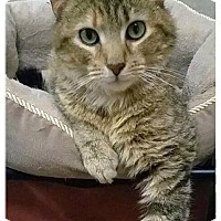 Adopt A Pet :: 16-038 Little Miss - York County, PA