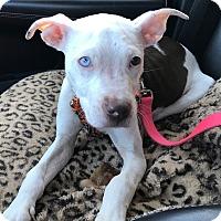 Adopt A Pet :: Fiona-Adopted! - Detroit, MI