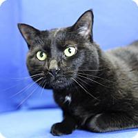 Adopt A Pet :: Muffin - Winston-Salem, NC