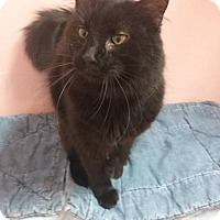 Adopt A Pet :: Red - Somerville, MA