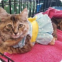 Adopt A Pet :: Gia - Smyrna, GA