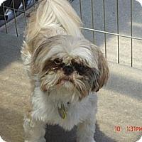 Adopt A Pet :: Opie - Denver, CO