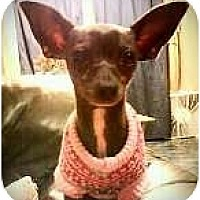 Adopt A Pet :: Bindy - Ocean City, NJ