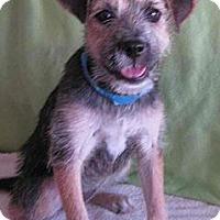 Adopt A Pet :: Abbey Road - Phoenix, AZ