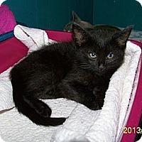 Adopt A Pet :: Gigi - Dover, OH