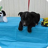Adopt A Pet :: Peppie - Humboldt, TN