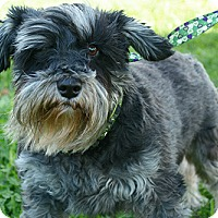 Adopt A Pet :: Mini and Lola (bonded pair) - Staunton, VA