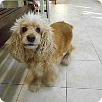 Adopt A Pet :: Candy -Adopted! - Kannapolis, NC
