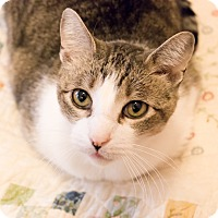 Adopt A Pet :: Harry - Chicago, IL