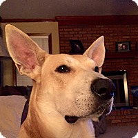 Adopt A Pet :: Gus (fostered in MS) - Cranston, RI