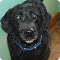 Adopt A Pet :: Friday - Columbus, IN