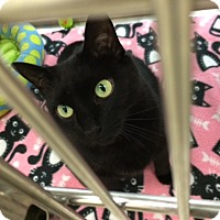 Adopt A Pet :: Luella - Byron Center, MI