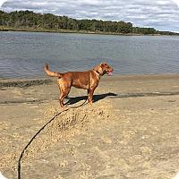 Adopt A Pet :: Gigi - Shelter Island, NY