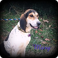 Adopt A Pet :: Mary - Denver, NC