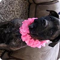 Adopt A Pet :: Luna - Yakima, WA