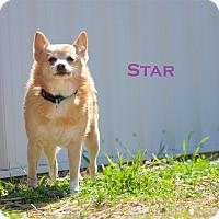 Adopt A Pet :: Star - Evansville, IN