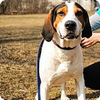 Adopt A Pet :: Gomer - Mt. Pleasant, MI