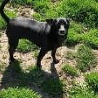 Adopt A Pet :: Cricket - Ashville, OH