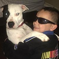 Adopt A Pet :: Meli- Courtesy Listing - Fredericksburg, VA