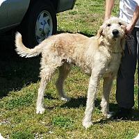 Adopt A Pet :: Horatio - Halifax, NC