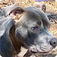 Adopt A Pet :: Parker-URGENT - CRANSTON, RI