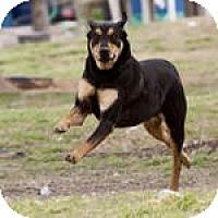 Adopt A Pet :: Parker - Katy, TX