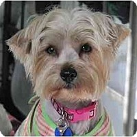 Adopt A Pet :: Cleo - West Palm Beach, FL