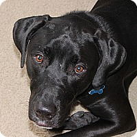 Adopt A Pet :: Romeo - Cumming, GA