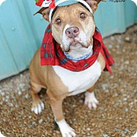 Adopt A Pet :: Edna - Liberty, MO