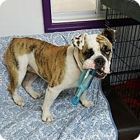 Adopt A Pet :: Woman - Brooklyn, NY