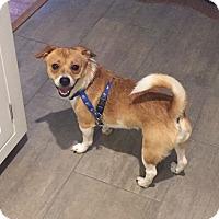 Adopt A Pet :: Zippy - Newtown, CT