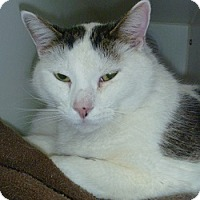 Adopt A Pet :: Spinar - Hamburg, NY