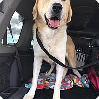 Adopt A Pet :: Gouda - Phoenix, AZ