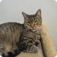 Adopt A Pet :: Mirabell - Broadway, NJ