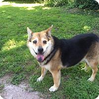 Adopt A Pet :: Ella Mae - Springfield, MO
