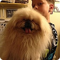 Adopt A Pet :: Smore  (Portland, ME) - Vansant, VA