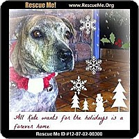 Adopt A Pet :: Kate IM SO PRETTY - Scottsdale, AZ
