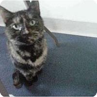 Adopt A Pet :: Kitty - New Egypt, NJ