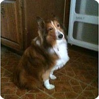 Adopt A Pet :: Toni - Indiana, IN