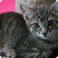 Adopt A Pet :: Hot Lips - Canoga Park, CA