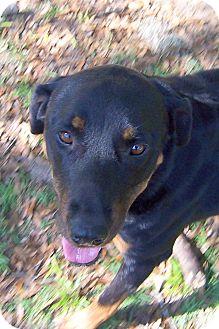 Rottweiler Mix Dog for adoption in Ravenel, South Carolina - Luna