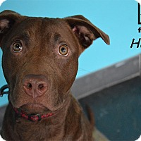 Adopt A Pet :: Hazel - Chicago, IL