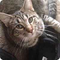 Adopt A Pet :: Simon - Ogallala, NE