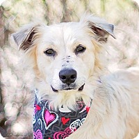 Adopt A Pet :: Prissy - Kingwood, TX
